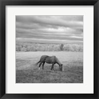 Framed Lone Horse