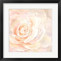 Framed Blush Rose Closeup I