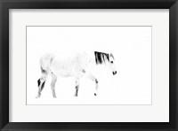 Framed Equine