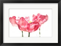 Framed Three Tulips