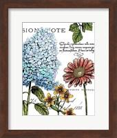 Framed Botanical Postcard Color I