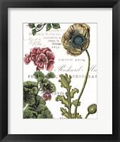 Botanical Postcard Color III Framed Print