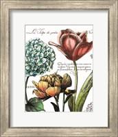 Framed Botanical Postcard Color IV