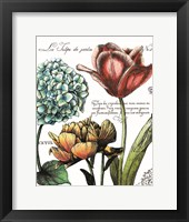 Framed Botanical Postcard Color IV
