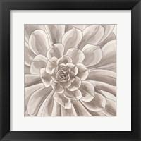 Framed Desert Succulent II