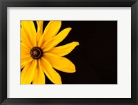Framed Black Eyed Susan I