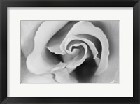 Framed Gentle Rose