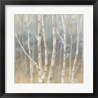 Framed Silver Birch Square