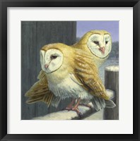 Framed Barn Owl Couple