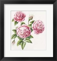 Framed 3 Roses