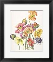 Framed 2010 Poppy Bouquet