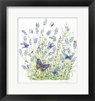 Framed Lavender