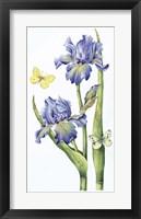 Framed May Iris