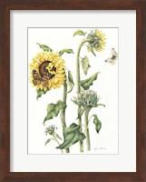 Framed October Sunflower