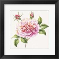 Framed Single Rose 2