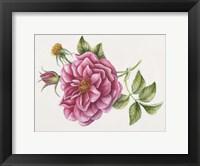 Framed Single Rose 9