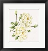 Framed White Roses