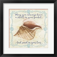 Framed Sea Shells  -  B