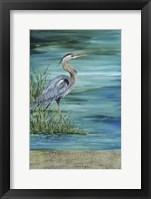 Framed Great Blue - Heron - 2