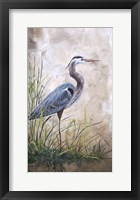 Framed In The Reeds - Blue Heron - A