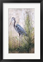 Framed In The Reeds - Blue Heron - B