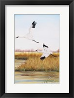 Framed Whooping Cranes - C