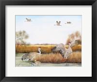 Framed Sandhill Cranes - A