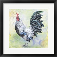 Framed Watercolor Rooster - C