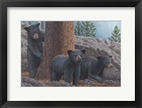 Framed Black Bear Cub Trio