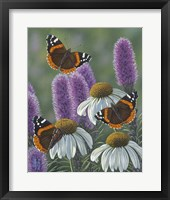 Framed Red Admirals