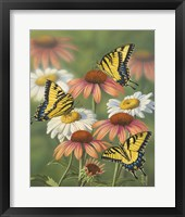 Framed Yellow Tiger Swallowtails