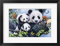 Framed Lovely Pandas