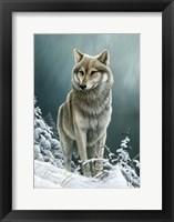 Framed Wolf On The Ridge