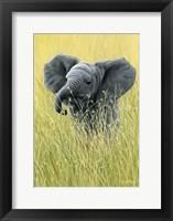 Framed Elephant In The Grass