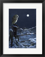 Framed Silent Night Barn Owl