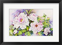 Framed Peonies with Pink Centers