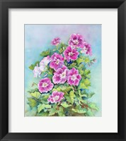 Framed Hot Pink Blush Geraniums
