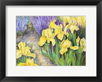 Framed Iris in a Rock Garden