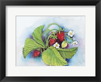 Framed Strawberry Patch - E. Sample Berries