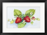 Framed Strawberry Patch - F. Berry Border