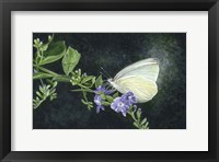 Framed Great Southern White