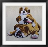 Framed Bulldogs
