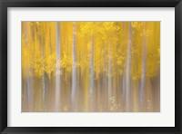 Framed Changing Seasons