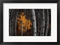 Framed Light of the Forest