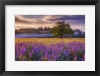 Framed Lupine Sunrise