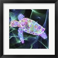 Framed Turtle 1