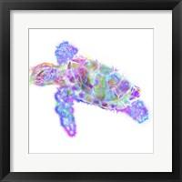 Framed Turtle 11