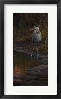Framed Walking The Edge - Great Blue Heron