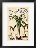 Framed Matthaeus Merian Narcissus-Early16s