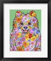 Framed Flowers Pomeranian